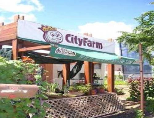 세계의 도시농업 정책