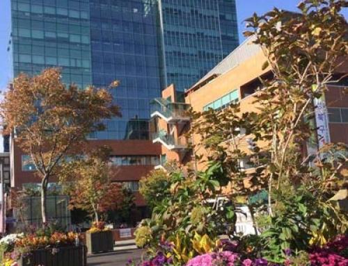성북구청사, 「SaiNt Flower & Garden Office」로 이미지 개선